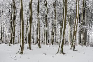 *Hochwald - Winter*