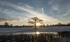 Winter Sunrise (The Crewe Chronicler) Tags: lowsun tree silhouette fuji fujix20 x20 fujifilm winter sunrise sun clouds sky