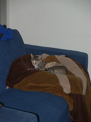 twix (6) (lorablong) Tags: twix cat pet westhollywood california