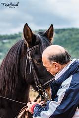 Marc & Lucho (TessAnjel) Tags: horse cheval poney espagnol spanish riding equitation entraînement dressage france animal animalier reflex eos 700d objectif lens 70200mm photography picture photo portrait