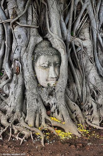 2017 05 - Thailand - 025