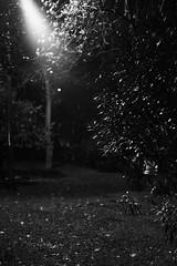 sony a7ii porst 55mm 1.2 no filter (yabankazi) Tags: sonya7ii a7ii porst 55mm 12 f12 manuel manuellens bokeh bokehlicious istanbul turkey night