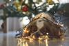 Tangled boy// Enredado (Mireia B. L.) Tags: cavalierkingcharlesspaniel cavalierkingcharles dog dogchristmaslights christmas christmaslights navidad nadal tangleddog tangleddogchristmaslights lucesnavidad perrolucesdenavidad perro christmas2017 pentacon50mm pentacon18