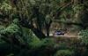 Rainforest. (Alex Penfold) Tags: bugatti veyron supersport super sport sports carbon fibre argentina 2017 alex penfold