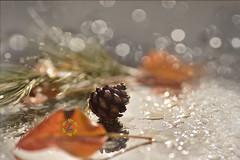 Happy New Year !!! (Zara Calista) Tags: new year 2018 leaf leaves bokeh droplets water dew pine cone orange
