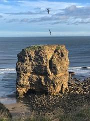 Marsden Rock (Mark240590) Tags: sand birds bird water sea beach seascape landscape seagulls northsea southshields marsden rock seaside