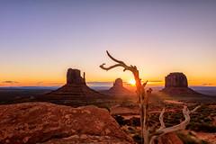 Reaching (KPortin) Tags: sunstar sunrise monumentvalley tree rockformations themittens arizona sandstone desert
