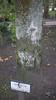 Fraxinus excelsior (Jusotil_1943) Tags: 171117 tronco fresno musgo verdin