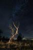 El pintor de estrellas. / The painter of Stars. (Recesvintus) Tags: árbol tree night noche nocturna nocturne photography fotografía stars starry sky estrellado estrellas cielo countryside campo landscape paisaje outdoors airelibre recesvintus