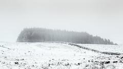 Monochrome  World / Ilkley Moor (gerainte1) Tags: ilkleymoor winter white snow blackandwhite monochrome forest
