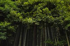 大徳寺 - Daitoku-ji (Hachimaki123) Tags: 日本 japan kyoto 京都 神社 daitokuji 大徳寺