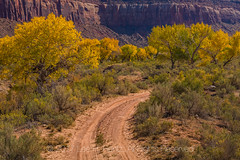 Dirt Road through Autumn Fremont Cottonwoods In Indian Creek National Monument (Lee Rentz) Tags: bearsears bearsearsnationalmonument canyonlandsnationalpark fremontcottonwood indiancreek indiancreekcorridorscenicbyway indiancreeknationalmonument needlesdistrict obama populusfremontii sr211 theneedles us191 america american autumn backroad blm bureauoflandmanagement canyonlands cliff cliffs color colorful cottonwood curve curving dirt fall fire flora formations gold golden gravel haze horizontal landscape leaves mesa mesas moab nationalpark nationalparkservice needles northamerica park plant road rock rocks route sandstone southernutah trees trump trunks usa utah west western yellow