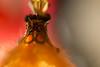 Chrismtas decoration detail (dakonst (catching up)) Tags: christmasdecoration december2017 flashexp bokeh canon6d konstantinosdaskoulias macro img7523 merrychristmas