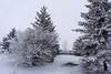 Winter Wonder Land (Snowbirds In Training) Tags: alberta canada crispy frosty outdooradventure wildernessexplorer outdoorlife natureshot naturelove naturephoto treemagic yyc yeg