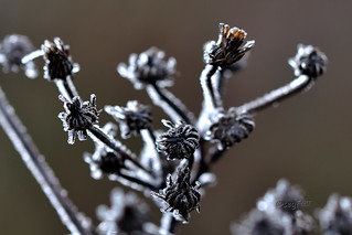 Upper Palatinate Winter