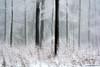 Winterzauber / winter magic (waellerwildlife) Tags: rotbuche fagussylvatica laubbaum fagus buche almindeligbøg europeanbeech commonbeech hayacomún hêtrecommun euroopanpyökki faggio beuk faiaeuropeia bok flora baum bäume westerwald buchen buchenwald fotografie germany naturfotografie nature westerwälderseenplatte wällerwildlife wildlife wied waellerwildlife wölferlingerweiher biotope brinkenweiher burens dreifelden dreifelderweiher freilingerweiher haidenweiher hofmannsweiher hachenburg hausweiher natur obererwesterwald obereswiedtal wolfgangburens steinebach steinebachanderwied rhinelandpalatinate wald forest fichte fichten fichtenwald sonnenuntergang gemeinefichte piceaabies gewöhnlichefichte rotfichte rottanne norwayspruce píceacomún píceadenoruega píceaeuropea épicéa épicéacommun peccio abeterosso fijnspar gran winter schnee dezember december gietzebeul