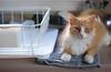 Jimmy (rootcrop54) Tags: jimmy orange ginger tabby male dish drainer helper kitchen counter neko macska kedi 猫 kočka kissa γάτα köttur kucing gatto 고양이 kaķis katė katt katze katzen kot кошка mačka gatos maček kitteh chat ネコ