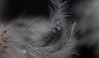 jan4 2018 20 (Delena Jane) Tags: delenajane dfo snowflake macro newfoundland ngc canada closeup dreamy soft pentaxart