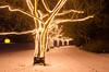 magic (sixthofdecember) Tags: berlin germany botanicalgardens botanischergarten christmasgarden christmaslights light lights fairylights dark darkness night nightshot snow winter tree trees nikon nikond5100 tamron tamron18270 nature outside outdoors