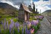 Craigieburn Station (katepedley) Tags: railway craigieburn station lupins lupin russell newzealand new zealand southisland canterbury canterburynz highcountry flowers summer building rail hut mountains wild canon 5d 1740mm polariser