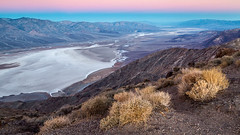 Good Morning Death Valley! (Kirk Lougheed) Tags: beltofvenus california dantesview deathvalley deathvalleyephedra deathvalleynationalpark earthshadow ephedra ephedrafunerea mormontea usa unitedstates mountain nationalpark park plant saltflat saltpan sunrise valley