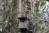 Rouge-gorge (Philippe Renauld) Tags: rougegorge domaine oiseaux arbre bois calmont occitanie france fr