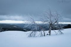 Winter tree (Cloudtail the Snow Leopard) Tags: baum hornisgrinde schnee snow winter mountain schwarzwald black forest