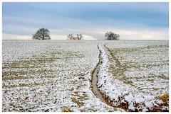 Matin de décembre (Pascale_seg) Tags: paysage landscape field hiver automne campagne champ snow tree sky aube aurore matin décembre winter autumn countryside moselle lorraine france