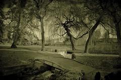 Mysterious .. (Julie Greg) Tags: park mysterious grass tree leedscastle canon autumn nature water smallriver