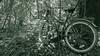 Eco Transport (Will Vale) Tags: zealandia karorisanctuary p9 wellington leica huawei karori p9plus