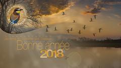 Carte de voeux 2018 (ÇhґḯṧtÖphε) Tags: 09 domainedesoiseaux france bonneannée2018 carte2018 ladddo wwwlesamisdudomainedesoiseauxfr ddo lesamisdudomainedesoiseaux mazères ariège occitanie