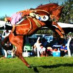Avalos y El Payador de El Horcón thumbnail