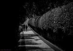 Zonas verdes. 00. Playa Blanca, diciembre 2016. (Jazz Sandoval) Tags: 2016 elfumador españa exterior enlacalle blancoynegro blanco bn bw contraste canarias calle curiosidad curiosity digital day dìa dos andando fotografíadecalle fotodecalle fotografíacallejera fotosdecalle gente humanos human humanfamily white islascanarias ilustración intriga jazzsandoval lanzarote luz light monocromática monócromo movimiento moving negro nero people pareja robados robado streetphotography streetphoto sombras playablanca paseo