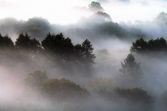 Mist in the trees (Caery Beor, Sept 17)