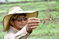 Seed regeneration Popayan 13