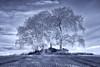 The Fulton Trees (J McSporran) Tags: scotland fultonstrees stirlingshire landscape canon6d ef1635mmf4lisusm