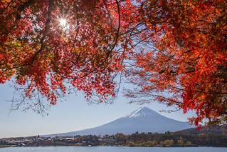 富士河口湖 Autumn colors with Mt.Fuji _MG_3871