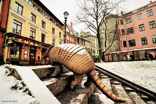 armadillo in city