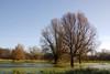 Trees and water (Johan Moerbeek) Tags: maalwater heiloo tree trees water herfst sky outside landscape bomen noordholland nederland ngc