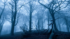 Winter solstice approaches... (Lee~Harris) Tags: tree trees winter fog mist magical fairytale spooky solstice landscape nature night lowlight outdoor branches anglezarke lancashire contrast serene eerie fz1000 ngc