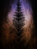 In the Shadows (scinta1) Tags: digitalart digitaleffects transformation dark light vignette ghostly shadows figure black orange purple symmetry vertical