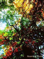 Souvenir d'automne (Noemie.C Photo) Tags: automn automne colors couleurs feuilles leaves leaf arbre tree saison season rouge red orange vert green branches jaune yellow nature