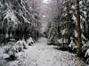 Winterwald (almresi1) Tags: winter schnee snow wood forest wald nature way weg tannen trees bäume landschaft landscape welzheim germany deutschland