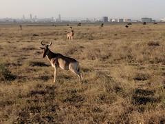 2017-12-28 17.45.07 (dcwpugh) Tags: travel nairobi kenya safari nairobinationalpark