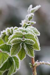 Vivre, c'est espérer et attendre... (NUMERIK33) Tags: explore numerik33 vert green froid hiver winter
