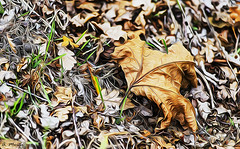 She alone. Ella sola (A. Muiña) Tags: hoja sheet otoño autumn invierno winter desenfoque bokeh campo countryside bosque forest color macrofotografía airelibre freshair naturaleza nature paisaje landscape garden jardín vegetable hierba grass post process nikon nikond800 macro planta plant