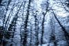 winter trees (Steff Photographie) Tags: arbre neige vitesse flou art atmosphére