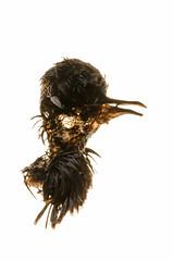 (rising from ashes) Tags: bird death decay rot rotten nature experiment experimental nikon nikkor nikondx animal d7000 softfocus soft unusual odd maggot