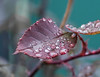 Time of Change. (Omygodtom) Tags: macro macrodreams bokeh raindrop waterdrops water tamron90mm tamron texture nikkor natural nikon dof branch leaves nature d7100 diamond outside winter