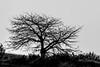 Tree by the hill (Pedro1742) Tags: blackandwhite silhouette whitebackground